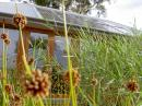 Reedbed & BIPV Canberra's Sustainable House
